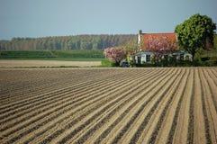 Het leven de lente van aardappelgebieden Stock Afbeeldingen