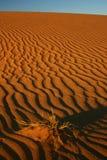 Het leven in de Sahara Royalty-vrije Stock Afbeeldingen