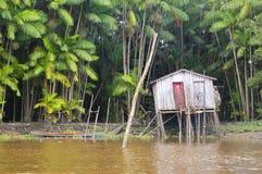 Het leven in de Wildernis van Amazonië Royalty-vrije Stock Foto's