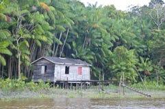 Het leven in de Wildernis van Amazonië Stock Fotografie