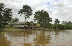 Het leven in de Wildernis van Amazonië Royalty-vrije Stock Afbeeldingen