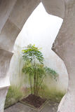 Het leven door beton wordt omringd dat Stock Fotografie