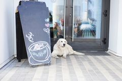 Het leven in een moderne stad - een grote mooie hond dichtbij een huisdier-vriendschappelijke koffie stock foto