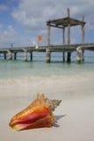 Het leven is een Strand (Kroonslak) stock afbeeldingen
