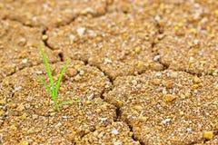 Het leven en strijd op droog land Stock Afbeeldingen
