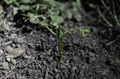 Het leven groeit in het hart van de aarde stock afbeelding
