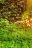 Het leven groene muur Stock Fotografie