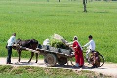 Het leven in India Royalty-vrije Stock Fotografie