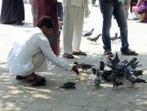 Het leven in India, mensen voedende duiven Stock Afbeelding