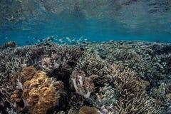 Het leven onder Overzees - tropische Wateren stock foto's
