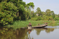 Het leven op de Wildernis van Amazonië stock foto