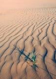 Het leven op de woestijn Royalty-vrije Stock Fotografie