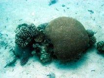 het leven op een koraalreef royalty-vrije stock fotografie
