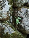 Het leven op stenen Stock Afbeeldingen