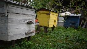 Het leven van bijen, in de tuin stock video