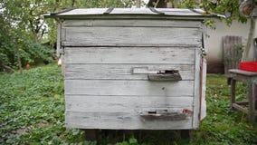 Het leven van bijen, ingang aan de bijenkorf, in de tuin, kippen stock footage