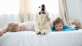 Het leven van binnenlandse huisdieren in de familie weinig broer en zuster liggen met hun hond op het bed in de slaapkamer stock videobeelden