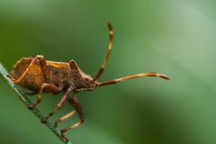 Het Leven van het insect Stock Afbeelding