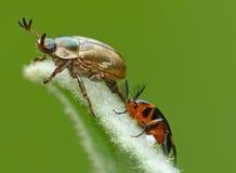 Het leven van het insect Stock Foto