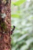 Het leven van het insecteninsect in bos regenend seizoen Royalty-vrije Stock Fotografie