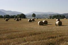 Het leven van het landbouwbedrijf Stock Foto's