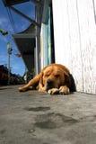Het Leven van honden Royalty-vrije Stock Fotografie