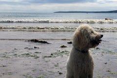 Het leven van honden Stock Foto's