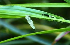 Het leven van insecten Royalty-vrije Stock Foto's