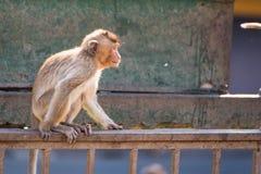 Het leven van lange staart grappige apen met archeologische plaatsen Lopburi Thailand royalty-vrije stock fotografie