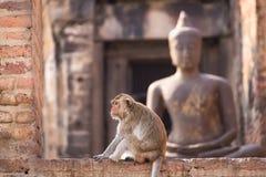 Het leven van lange staart grappige apen met archeologische plaatsen Lopburi Thailand stock fotografie