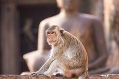 Het leven van lange staart grappige apen met archeologische plaatsen Lopburi Thailand stock afbeeldingen