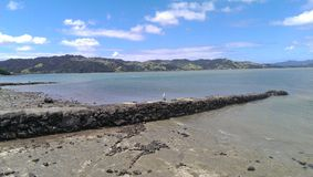 Het leven van Nieuw Zeeland Stock Afbeeldingen