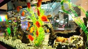 Het leven van overzeese vissen in duidelijk water in een groot aquarium stock videobeelden
