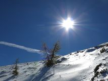Het leven van zonnige bomen in sneeuwbergen Stock Fotografie