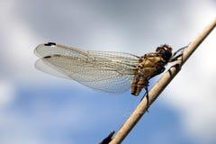 Het leven VI van het insect Royalty-vrije Stock Foto's