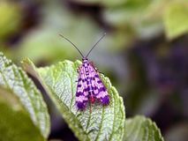 Het leven VIII van het insect Stock Afbeelding