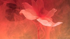 Het leven wikkelen de abstracte vlekken van de koraalkleur van inkt in het water bloem saaie wolk stock videobeelden