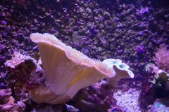 Het levendige kleurrijke aquatische leven in donker vertoningsaquarium Stock Foto