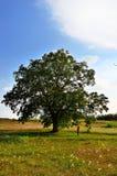 Het levensboom Stock Afbeeldingen