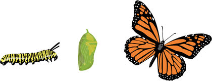 Het levenscyclus van de vlinder Stock Foto