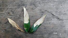 Het levenscyclus van het acaciablad tegen een rustieke houten achtergrond Royalty-vrije Stock Afbeelding