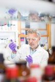 Het levenswetenschapper die in het laboratorium onderzoeken. Stock Fotografie