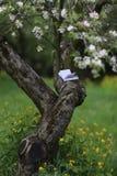 Het lezen in de tuin Stock Foto