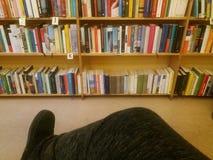 Het lezen in een bibliotheek Stock Foto