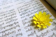 Het lezen van Birmaans boek Stock Afbeeldingen