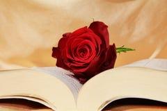 Het lezen van de bijbel Stock Afbeelding