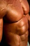 Het lichaam van de bodybuilder Royalty-vrije Stock Foto's