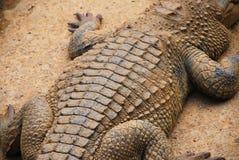 Het lichaam van de krokodil Stock Fotografie