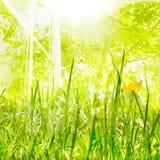 Het licht en de groei van de lente Royalty-vrije Stock Foto's
