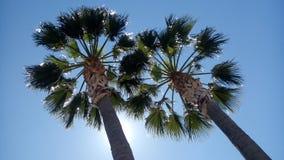 het licht gaat door palmen stock afbeeldingen